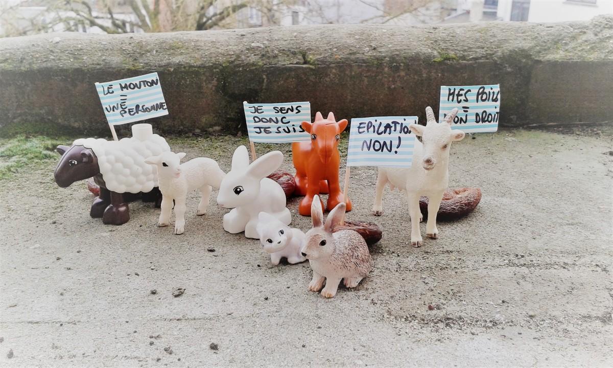 Laine et bien-être animal / I : le tricot, c'est mal?